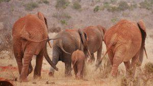 2 days kenya safari from mombasa