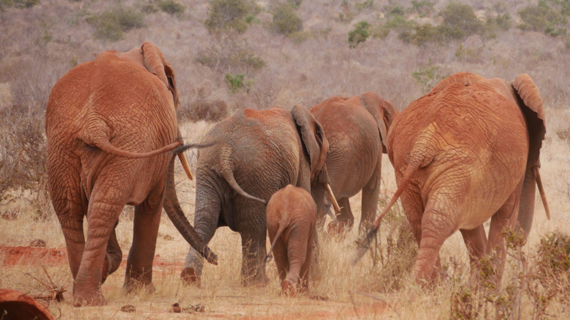 2 Days Safari starting from Mombasa to Tsavo East