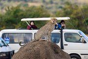 2 days Safari from Mombasa to Tsavo East