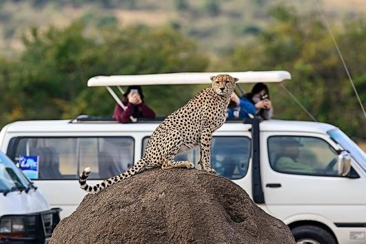 2 days Safari from Mombasa to Tsavo East