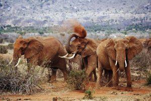 tsavo west safaris