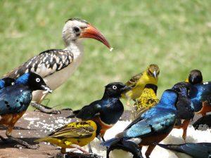 Birding safari Tsavo