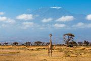 Amboseli Wildlife