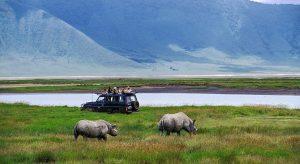 Ngorongoro and Masai Mara