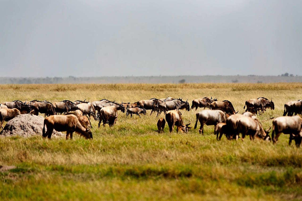 3 day Amboseli Safari