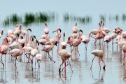lake nakuru national park safari