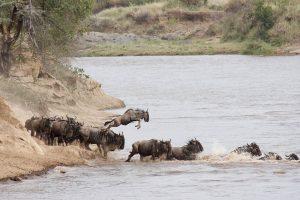 budget migration safari