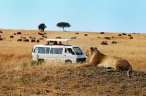 3 day masai mara lodge safari
