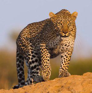 nairobi mombasa safaris