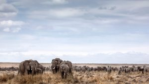 safaris in kenya
