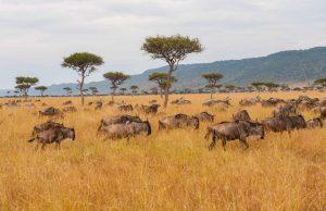 Masai Mara Game Reserve Kenya