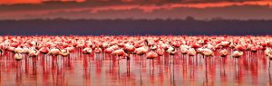 5 Days - Lakes and the Wilderness safari