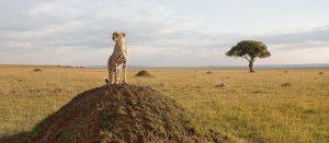 Masai Mara Lodge safari
