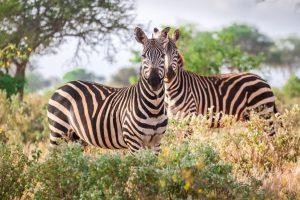 Tsavo west safari and beach