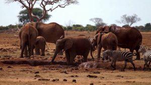 Tsavo East Kenya