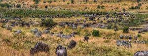 Masai Mara Kenya