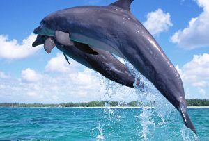 Dolphins Wasini Island
