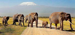 Nairobi Mombasa safari