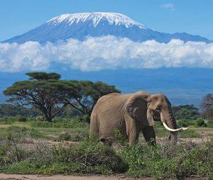 4 days Safari Kenya Amboseli Tsavo