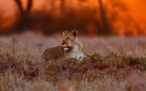 11 days honeymoon Kenya safari beach