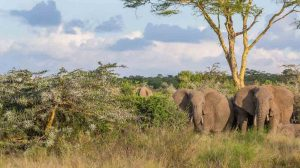 2 week Kenya safari beach holiday