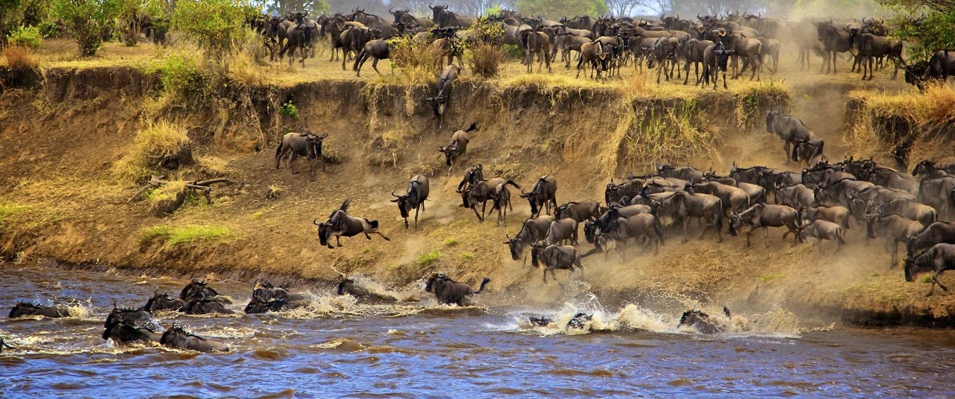 03 days Masai mara safari tour