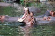 3 Days Mombasa safaris Tsavo
