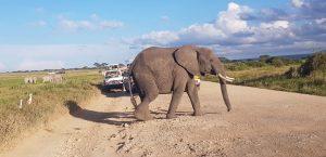 3 day Amboseli safari midrange