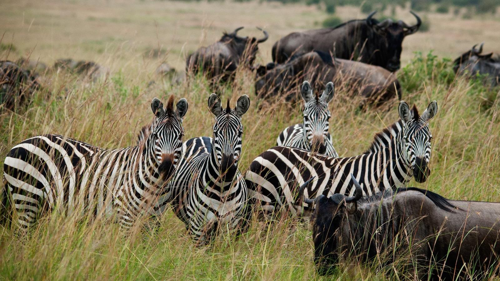 3 day masai mara lodge safari