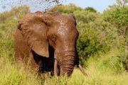 3 days Mombasa safari Tsavo west