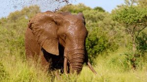 3 days Mombasa safari Tsavo west