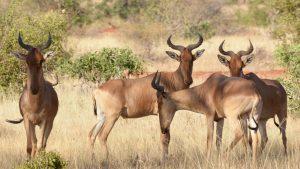 3 days safari Tsavo East & West