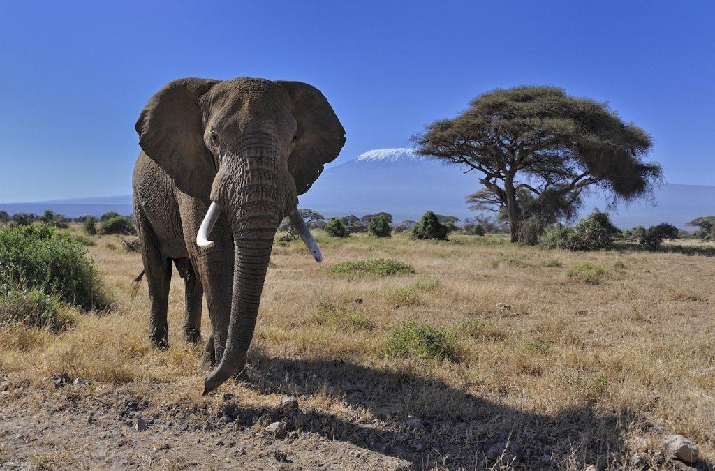 3 days safari Kenya Amboseli affordable