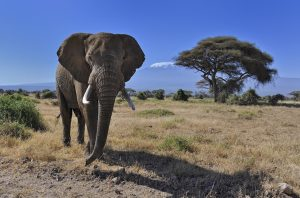 3 days safari Kenya Amboseli affordable