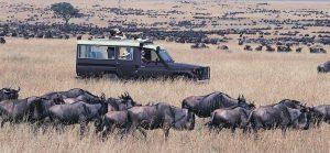 4 Days Masai Mara Lake Nakuru