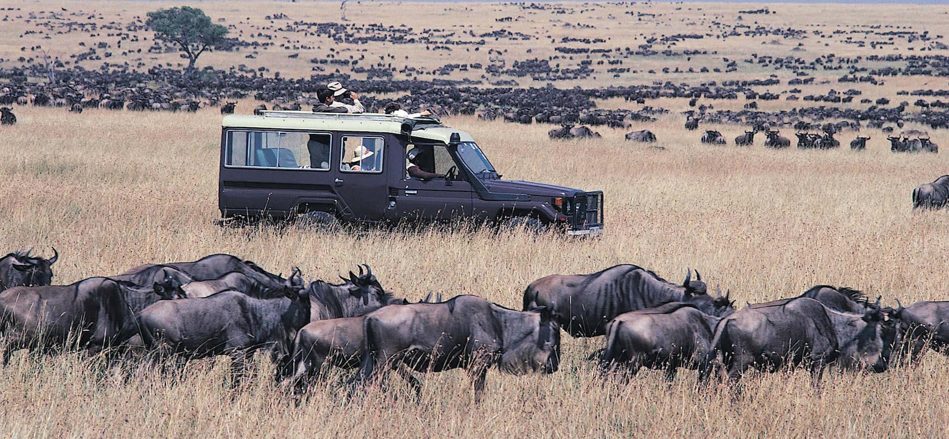 4 Days Kenya Safari Masai Mara & Lake Nakuru