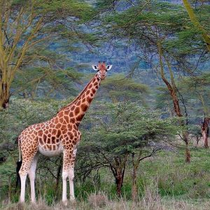 4 days safari Kenya