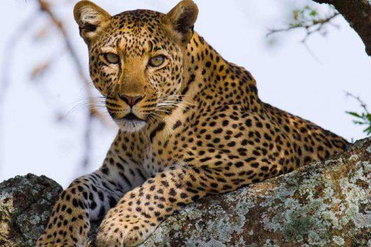 5 Days Classic Kenya Lodge Safari