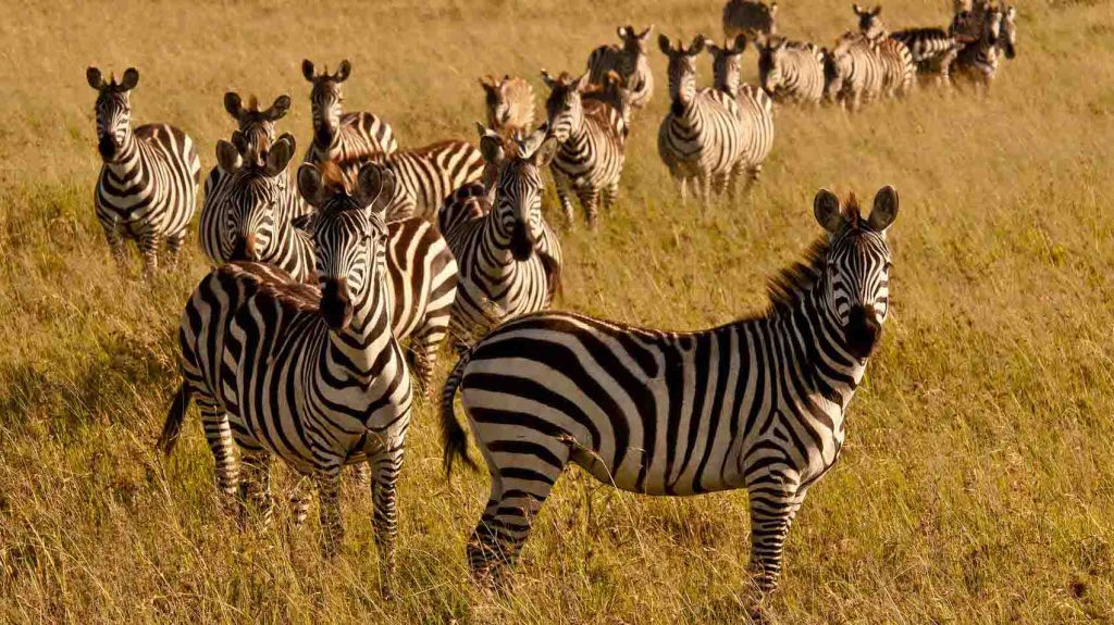 five days lodge safari Kenya