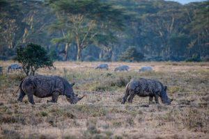 5 days camping Kenya Rhinos