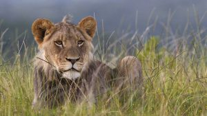 5-day Lodge Kenya safari