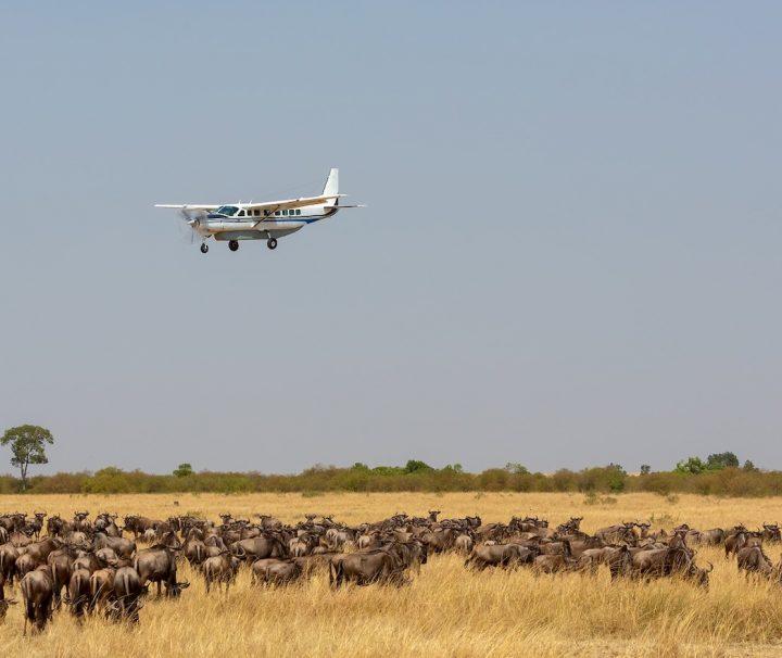 8 days Fly in Kenya Safari