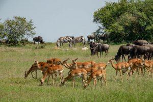 8 days Fly in safari Kenya Masai Mara