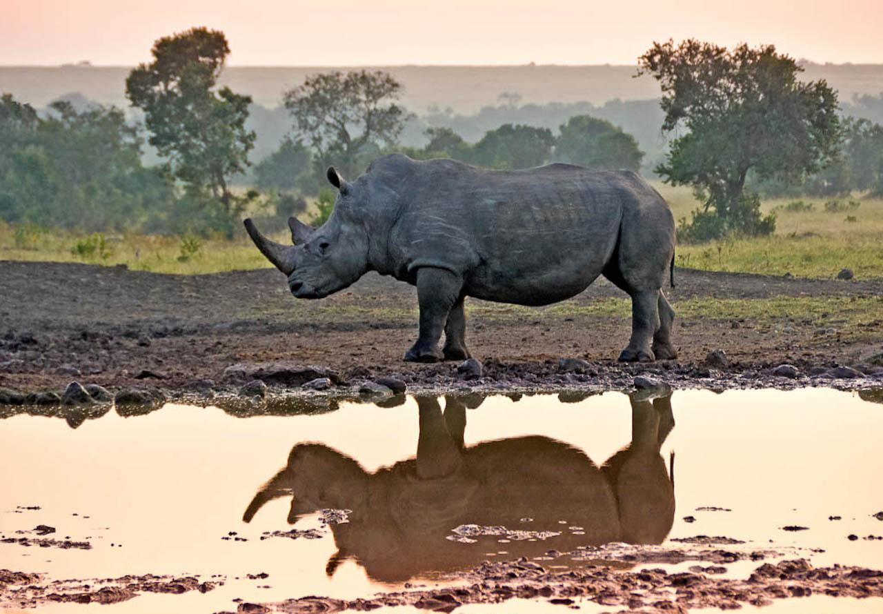 9 Days Safari best of Kenya