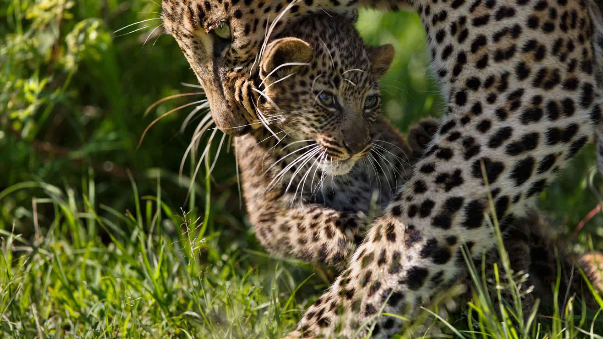9 days Best of Kenya Wildlife Safari ; Off the beaten path