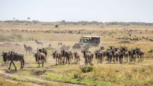 Kenya Tanzania Safari Tour
