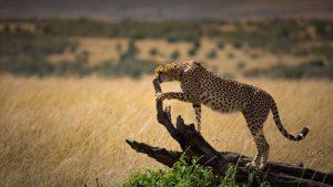 camping 5 days safari kenya