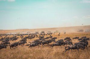 Kenya Migration Safari Camping