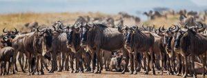 kenya Safaris from nairobi