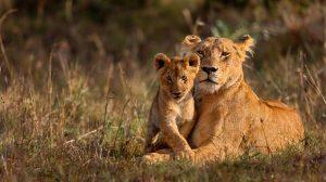Kenya Tanzania Combined Safari